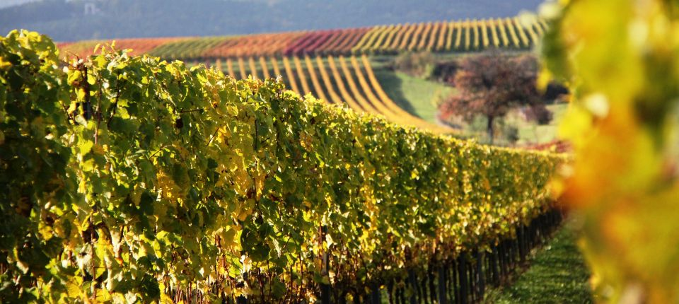 Weingut Weingut Edelhof Minges in Kirrweiler Pfalz